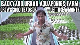 Backyard Urban Aquaponics Farm Grow 3000 Heads of Lettuce a Month
