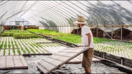 New Invention: The Farming Fish – Growing Aquaponics and Superfoods