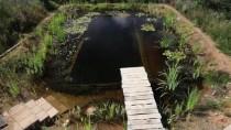 Natural Pools – Natural Pool selfbuild